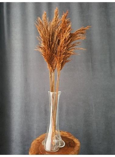 Kuru Çiçek Deposu Kuru Çiçek Şoklanmış 10'Lu Pampas Otu Karışık 100 Cm Oranj